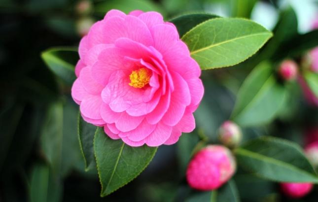 Flower, Renee Naturally