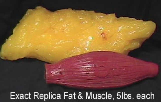 Muscle vs. fat weight, Renee Naturally
