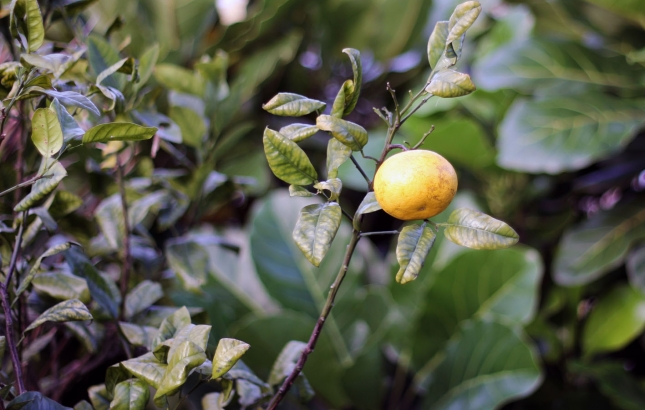 Benefits of Lypo-Spheric Vitamin C
