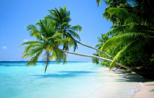 Benefits of Pacific Tamanu Oil, Renee Naturally
