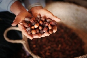 Benefits of Argan Oil for Healthy Hair // by Renée Naturally (Naturopath & Nutritionist)